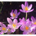 Blumen im Frühling